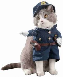 Katze in Uniform